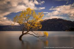 https://flic.kr/p/MuGpby | Wanaka Long Exposure | Since everyone is getting in the fall mood, here is a shot from New Zealand's most famous tree. I did a long exposure here and it took multiple attempts until I got a shot where the tree leaves didn't blow in the wind!