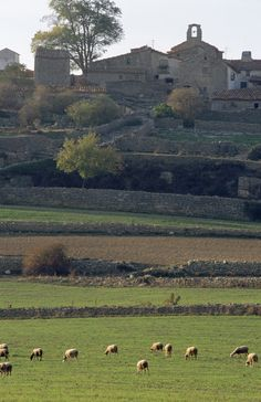 Els Llivis Morella (Castellón)