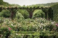 Rose garden from Madison Cox Garden Design via WSJ 8 Landscape Architecture, Landscape Design, Patio Design, Garden Design, Country Cottage Garden, Garden Spaces, Outdoor Spaces, Pergola, Roses