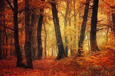 "Landscape photography - autumn forest canvas print  - wall art - home decor - ""ITTCT. XLI."" by Zsolt Zsigmond (realityDream) - SKU0080"