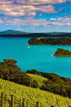 Te Whau Vineyard, Waiheke Island, Hauraki Gulf, New Zealand