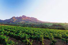 Western Cape winelands
