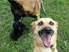 Funny animal selfies can make your day happier. These selfies will make you laugh for hours. Check out these 30 Funniest Animal Selfies. Funny Babies, Funny Dogs, Cute Dogs, Funny Animal Pictures, Funny Animals, Cute Animals, Little Dogs, Big Dogs, Son Chat
