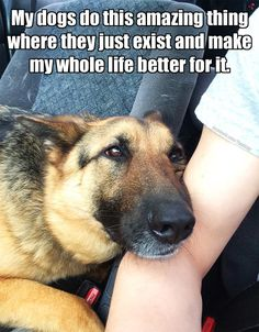 Dogs make your life better