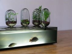 Made by Matthew Lehanneur. I don't really find the design appealing. But, I enjoy its story behind, and its purpose. A fish hatchery, and vegetable garden, which has the plants to filtrate the water from the tank, as well as providing it nutrients and the water to grow.