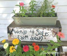 Paint a Fun Garden Sign http://www.hometalk.com/19576145/weeds-for-sale-dirt-cheap-fun-diy-garden-sign?se=fol_new-20160805-1&date=20160805&slg=744fd2374c566682a9af3b959c6971f9-1110481