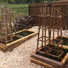 DIY Veggie Garden.  Tomato cages made from old cedar fencing and planting boxes made from landscape timbers.