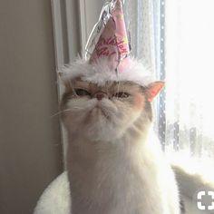 Go shawty it's yo birthday!