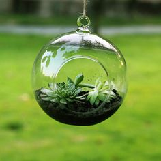 1 joli Pot Vase Terrarium en verre transparent