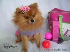 Image result for pom pom dogs images Pom Dog, Doggies, Image, Little Puppies, Pet Dogs, Puppys, Puppies