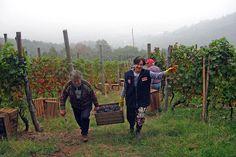 TASTE THE WINE. I vini delle colline saluzzesi ai Salotti del Gusto dell'Alta Badia. Grazie alle VIGNE MONTE D'ORO del Conte Francesco Bentivoglio