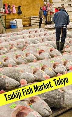 A visit to Tsukiji Market, the world's largest fish market in Tokyo, Japan