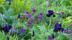 Selected Designs  Sue's portfolio covers a wide range of garden designs which vary in style, scale and setting – from contemporary town gardens to coastal gardens and large country gardens. Every garden design and planting scheme is unique and is designed to reflect the needs