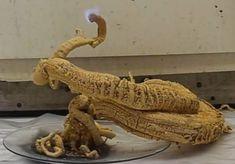 Pharaoh's serpent