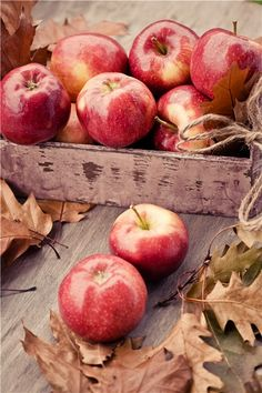 Some fruits of fall harvest, apples are very good for health. Apple Harvest, Harvest Time, Fall Harvest, Autumn Day, Autumn Leaves, Autumn Aesthetic, Red Apple, Apple Pie, Autumn Inspiration