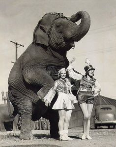 circus girls with standing elephant