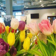 А у нас в @netizenhostel весна!Цветы распускаются, приятная музыка, хорошее настроение Именно так должна начинаться неделя! Всем тёплого настроения  #netizen #hostelmoscow #hostel #хостелмосква #хостел #весна #цветы #отдых #женщины #любовь #красота #morning #flowers #утро #8марта #дом #уют #настроение