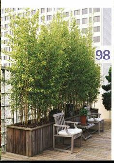 Use bamboo to hide ugly view...trash & recycling cans