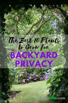 Keep The Secret Garden Hidden secret garden The Best 10 Plants to Grow for Backyard Privacy Natural Privacy Fences, Natural Fence, Outdoor Privacy, The Secret Garden, Hidden Garden, Secret Gardens, Secret Garden Parties, Privacy Plants, Privacy Landscaping