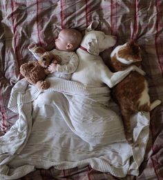 Baby, dog and cat. An animal lover in the making.