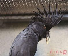 Gray Kid the parrot, one of the residents of the Nanjing Hongshan Forest Zoo in China, has been given a chance at a normal life after receiving a 3D printed beak that lets him eat normally again: