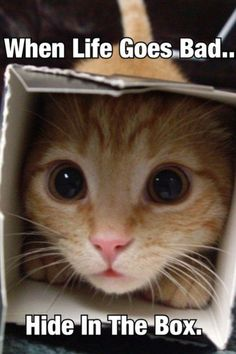 Hide in the boxes is always the solution