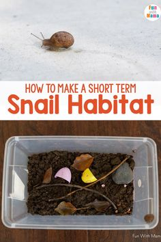 This snail habitat is so much fun to make! It's a simple activity that the kids will love to do! All you need are a few supplies to get started! Kindergarten Science Activities, Preschool Activities, Outdoor Activities, Easy Science, Science For Kids, Stem For Kids, Educational Games For Kids, Lessons For Kids, Nature Crafts