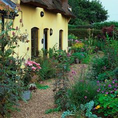 English cottage garden. This thatched cottage has front gravel garden planted with eryngium, teasels, Verbena bonariensis, lilies, ferns, phlomis and nasturtium.