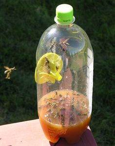 Fatal Funnel Wasp, Hornet and Yellow Jacket Trap Garden Insect Control is part of braids - The Fatal Funnel Wasp, Hornet and Yellow Jacket Trap from Gardener's Edge will keep your garden, backyard, or campsite sting free Shop today!