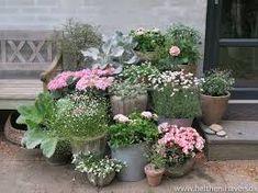 Perfekte pelargonier - Helt hen i haven Flower Pots, Outdoor Living, Nuancer, Garden, Google, Decks, Plants, Flowers, Flower Vases