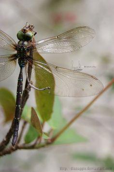 dragonflies IV by https://www.deviantart.com/dianapple on @DeviantArt
