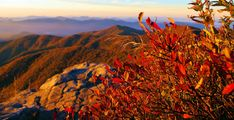 Asheville NC Mountain Fall Leaf Color Forecast & Events 2014 - Blue Ridge Parkway & Great Smoky Reports