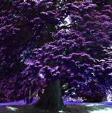 Art gallery of Jessica Design Doyle. Purple Trees, Art Gallery, Digital Art, Flowers, Plants, Photography, Design, Art Museum, Photograph