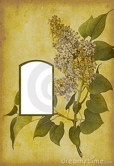 Antique Photo Album Page by Czbrat, via Dreamstime