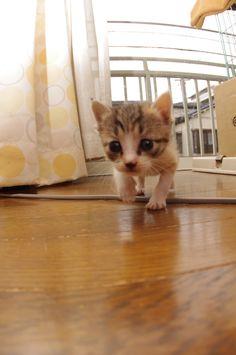 Castella-chan. Kitty CAT