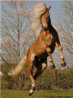 Horse in mid air.