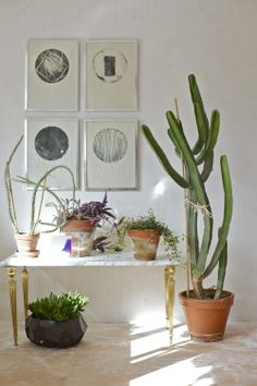 Table of plants