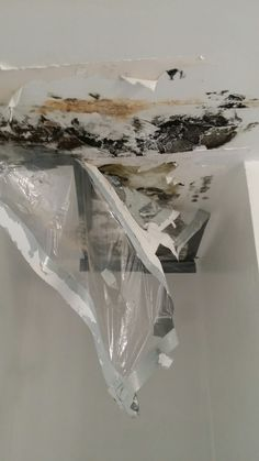 Mold Removal and Remediation Services Galery