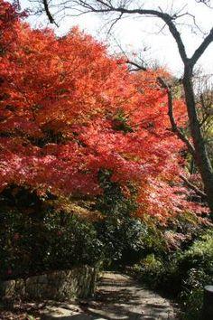 Autumn  in Asano Park