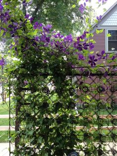 Clematis Mattress Spring Trellis - Medora, North Dakota
