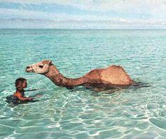 Camel Dip