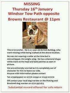 #HelpFindThem we're still all lookin for Scruncher Bulldog #Windsor 4  #MissingHimMadly Lets get him home pic.twitter.com/eHjMhskAny