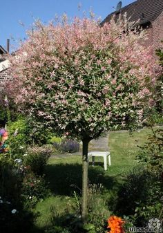56 ideas landscaping trees and shrubs lawn Landscaping Along Fence, Landscaping Around Trees, Backyard Landscaping, Front Yard Plants, Small Front Gardens, Backyard Plan, Landscape Design Plans, Garden Cottage, Garden Trees