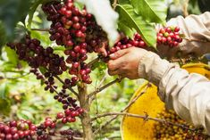 12 Photos of the Coffee Region That Show a Rarely Seen Side of Colombia