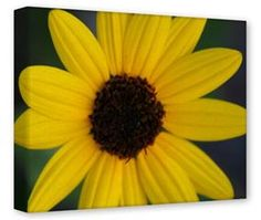 Gallery Wrapped 11x14x1.5  Canvas Art - Yellow Daisy