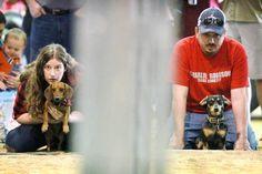 Victoria Livestock Show Parade and Wiener Dog Races | Victoria Advocate - Victoria, TX