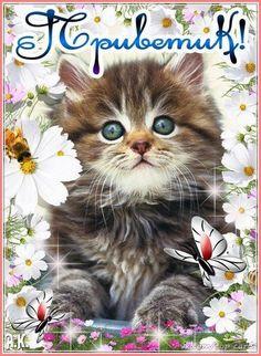 Открытка Приветик. - анимационные картинки и gif открытки. #открытка #открытки #привет #приветик #открыткаприветик #открыткапривет