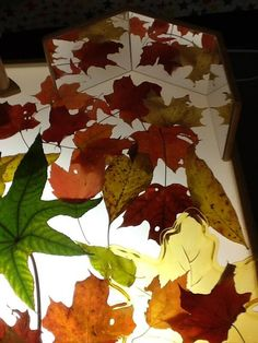 Stunning colored leaves with mirrors on light table.