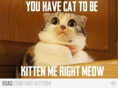 Right meow!  @jessicat
