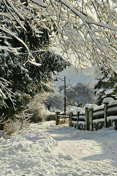 Beautiful winter wonderland!